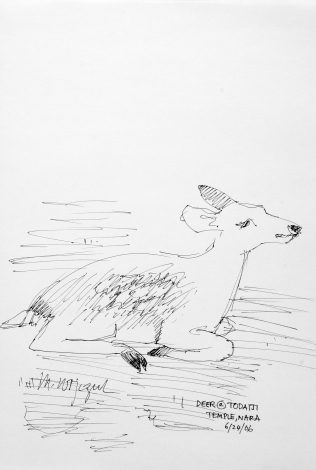 41. Deer at Todaiji Temple Nara 6-24-06