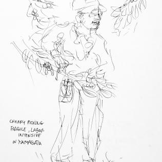 79. Cherry Picking Fragile, Labor Intensive in Yamagata 6-30-06